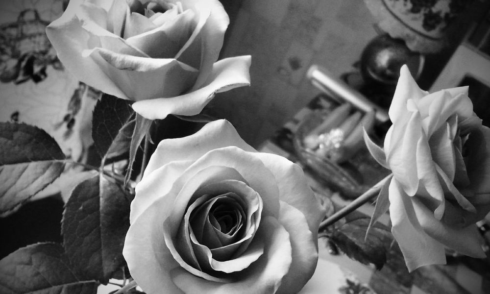 """A flower doesn't try to compete with the one next to it. It just BLOOMS!"" 😋😚 Roses Flowerporn Flower Collection Flowers Taking Photos Andrography PhonePhotography Fortheloveofblackandwhite Eye4photography  EyeEm Best Shots - Black + White Blackandwhite Monochrome Beautiful Flowers_collection Flowerslovers Bw_collection Quotes"