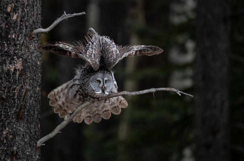 Owl on branch in forest
