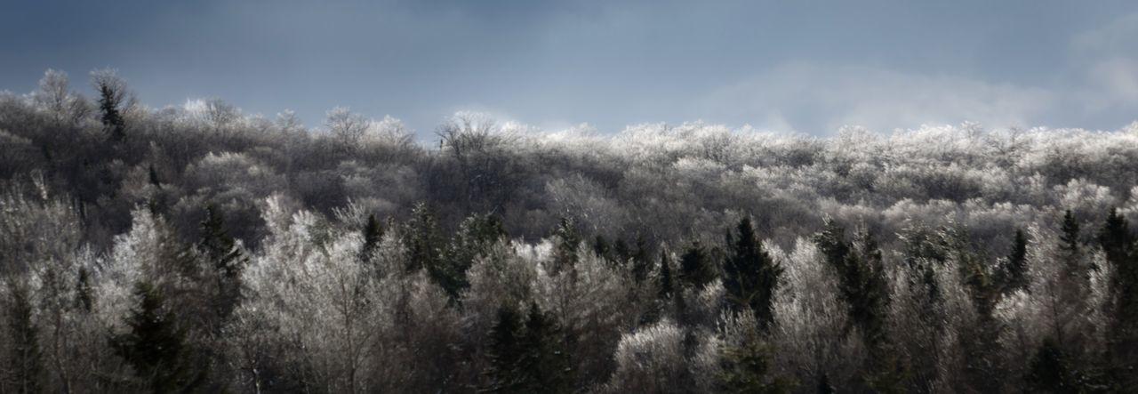 Ice Rain Frozen