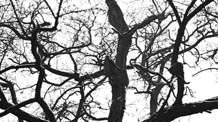 Walking Around Monochrome Streetphotography OpenEdit Black And White 帝國喜喜脈