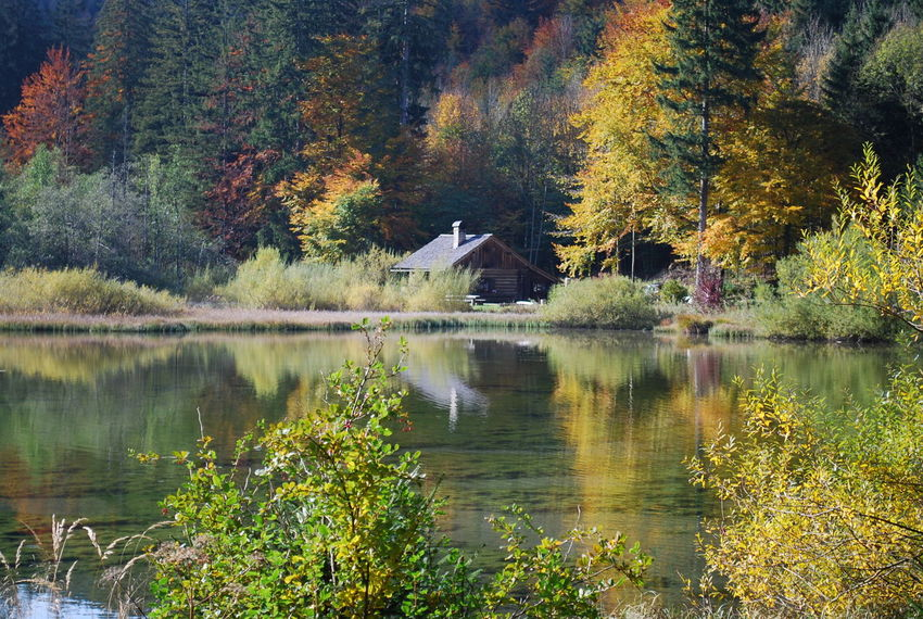 Atumn Colors Autumn Beauty In Nature Forest Herbst Herbststimmung Lake Nature Outdoors Reflection Scenics Taferlklaussee Tree Water