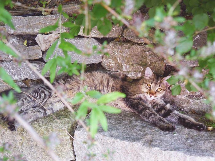 Purzel Cats Cat Animal Garden Rock Wall Tree Leaves Plants Light Colors Enjoying Summer Nature