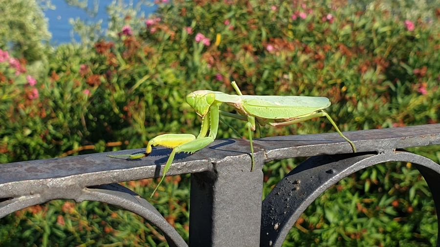Close-up of grasshopper on railing