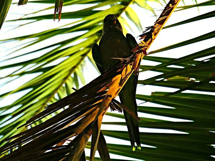 Shadow Palmtree Parrot Green From My Point Of View Parkphotography Eyeemcollection Abstract Animalphotography Naturephotography Beauty In Nature Parkguell SPAIN Barcelona Calming Eye4photography  Eyemart