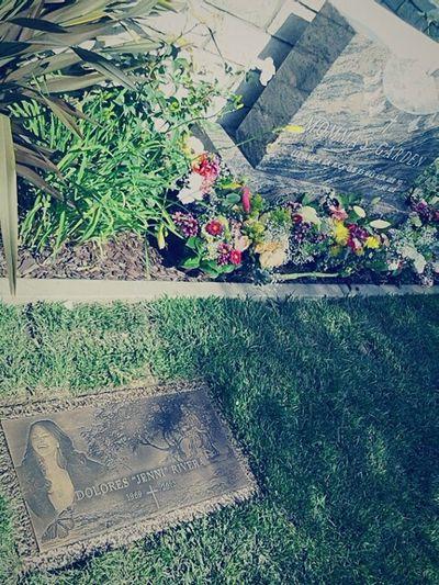 Flower Celeberty Jennirivera Rip Cementery Tombstone Longbeach