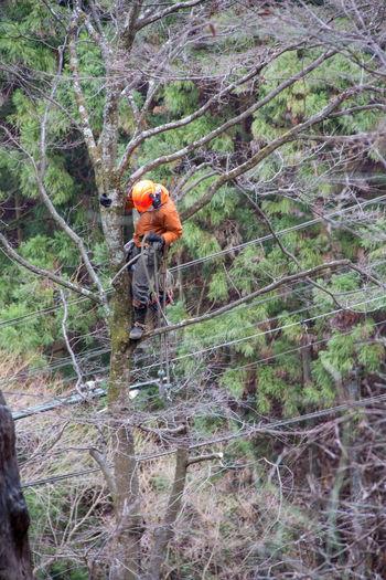 Workers Adventure Forest Helmet Men Outdoors Tree