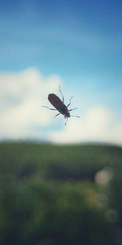 bug on the
