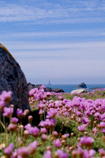 EyEmNewHere Lighthouse Beauty In Nature Day Flower Flowering Plant Fragility Freshness Growth Horizon Horizon Over Water Land Nature No People Outdoors Pink Color Plant Purple Scenics - Nature Sea Selective Focus Sky Vulnerability  Water