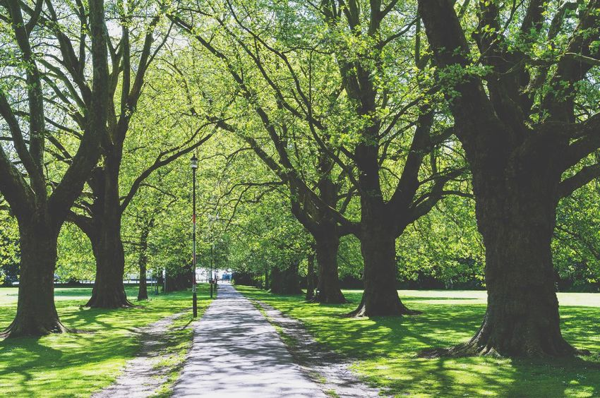 Alley in the park Nostalgic  England Cambridge Vintage Retro Tree Plant Green Color Beauty In Nature Growth Nature Trunk Land Sunlight Tree Trunk Park Shadow Tranquility Day Tranquil Scene Direction Branch Park - Man Made Space Scenics - Nature The Way Forward