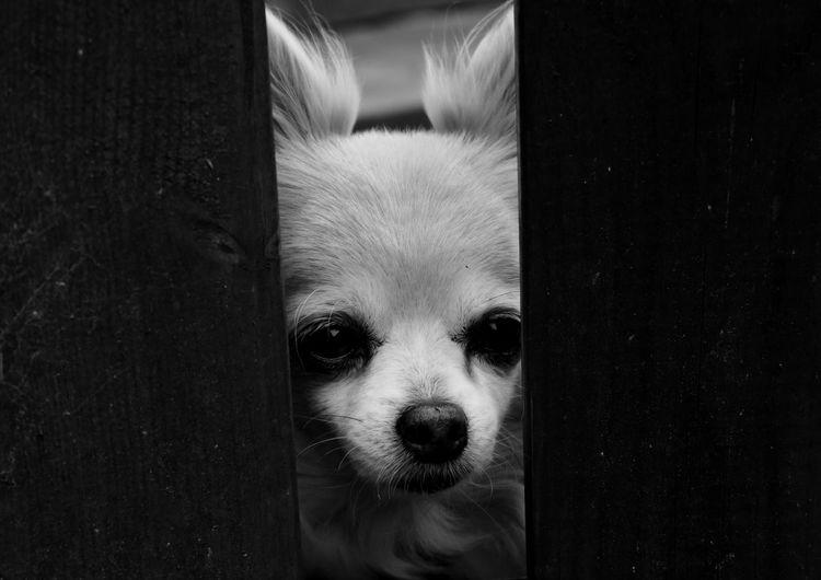 Close-up portrait of dog seen through ajar door