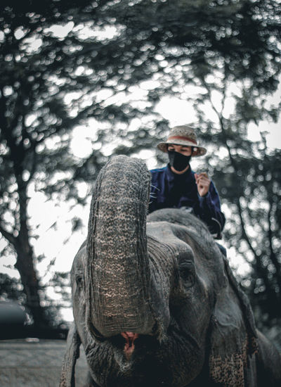 Young woman wearing mask riding on elephant