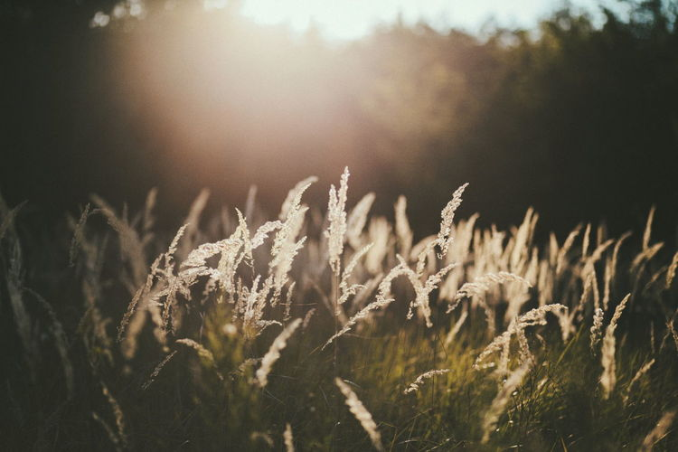 Sunlight falling on wild grass