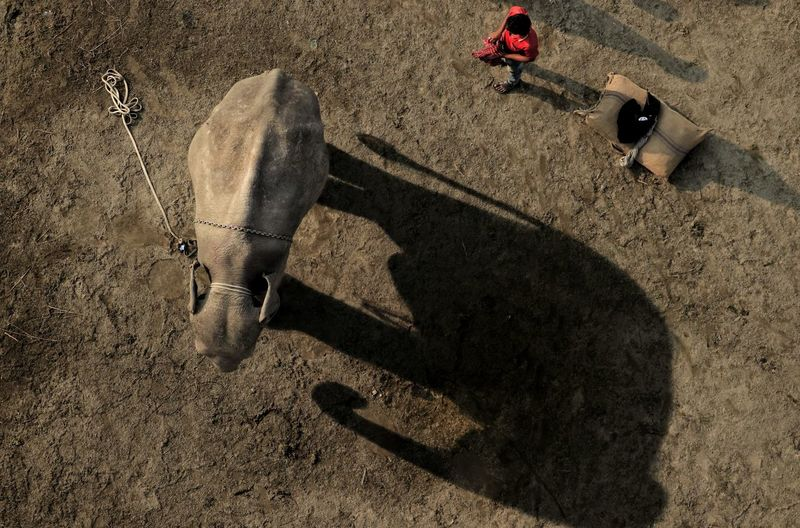 High angle view of man and an elephant standing