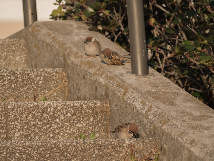 Side view of bird perching on retaining wall
