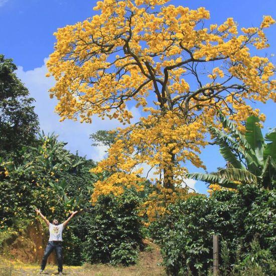 Cosas que amo: un incomparable paisaje, un deslumbrante guayacan, mi gran amor y una estupenda fotografía, todo junto para un maravilloso día.
