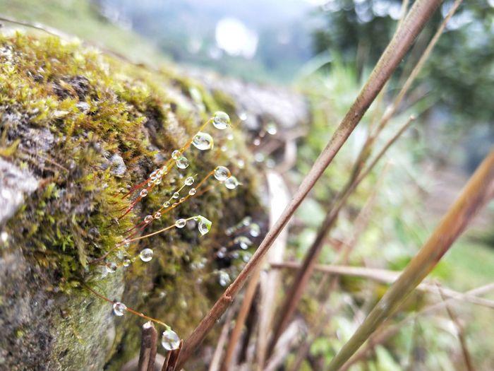 Moss Microworld