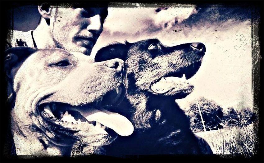 J0K3R My Dog ;D Otis EyeEm Best Shots