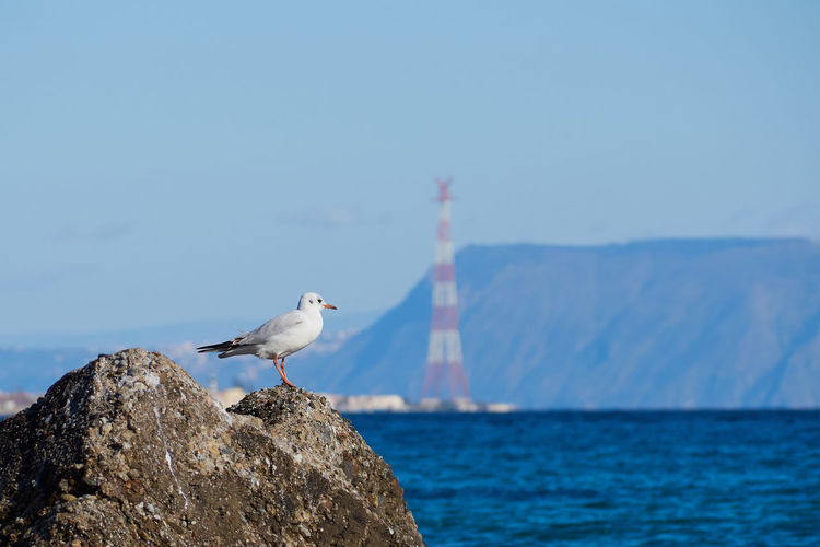 Sea of Messina with a seagull on a rock and the pylon in the background Mediterranean  Sicily Animal Themes Animal Wildlife Animals In The Wild Beauty In Nature Bird Day Italy Messina Mountain Nature No People One Animal Outdoors Perching Rock - Object Sea Seagull Sky Water