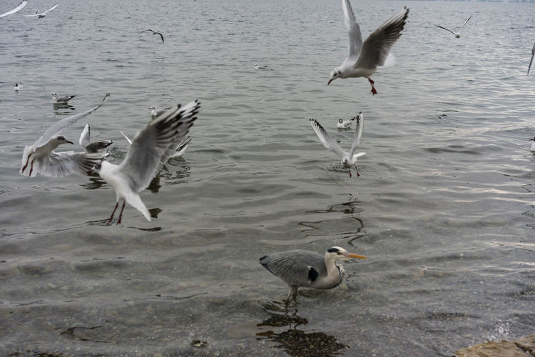 sea gulls on