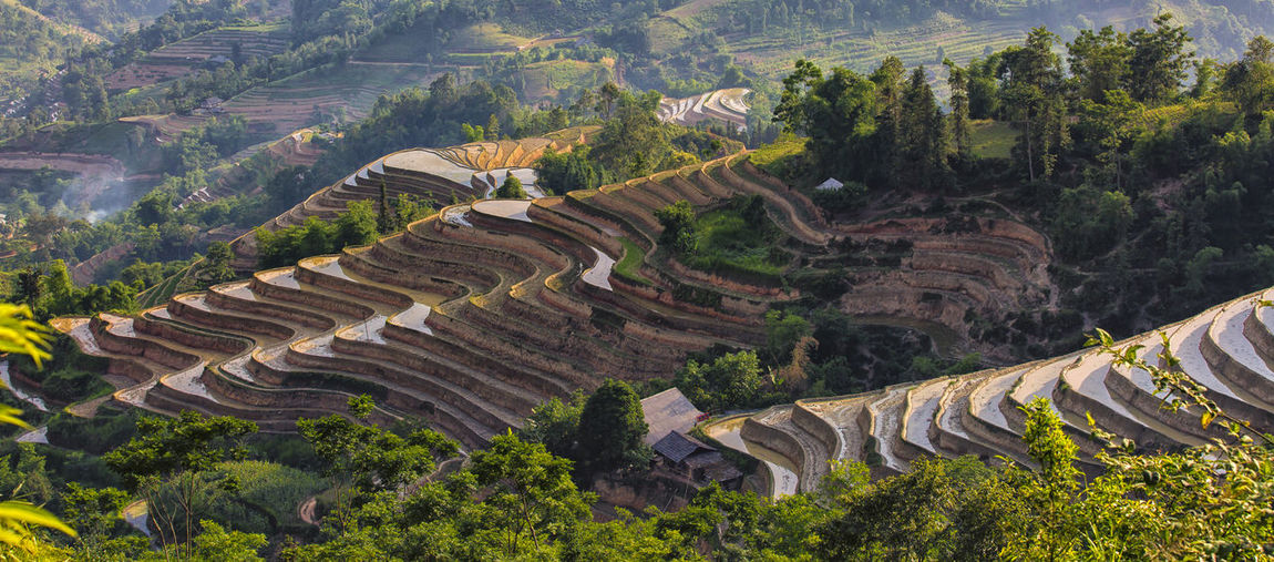 rice terraced fields   water season Ancient Civilization Day High Angle View Nature No People