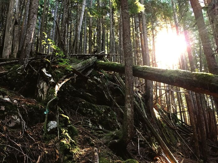 Squamish Squamishadvetureinn Lovecanada Canada Seatosummit Trail Wood Forest Adventure