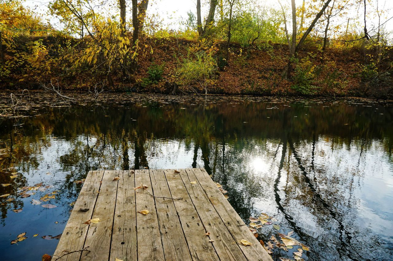 WOODEN PIER ON LAKE IN FOREST