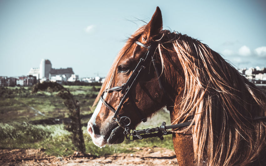 Le cheval brun EyeEmNewHere EyeEm Best Shots The Week on EyeEm EyeEm Nature Lover Mode Of Transport Brown Brown Hair Horse Photography  Animal Body Part Headshot HEAD Horse Domestic Animals Day One Animal Outdoors Animal Themes Mammal Beauty No People Sky Nature