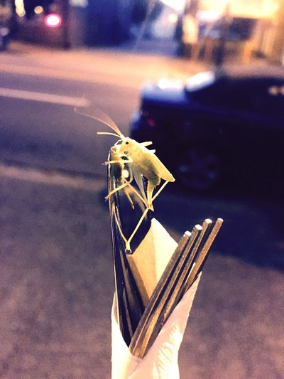 Grasshopper Food Tainted Fork