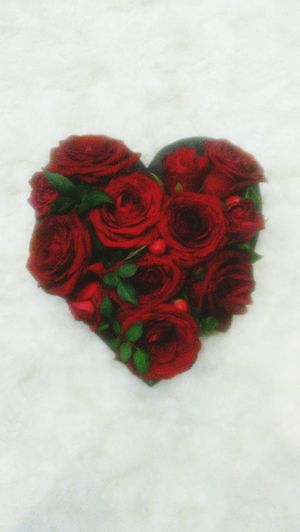 Love ♥ Roses🌹 In The Heart