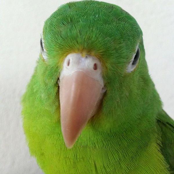 Parrot Like Animals RGanimals naturelovers green bird jt2t ▲