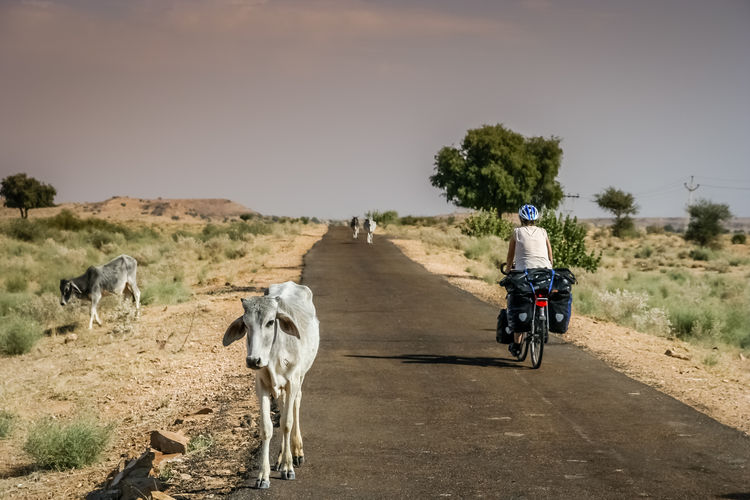 View of horse riding motorcycle on dirt road