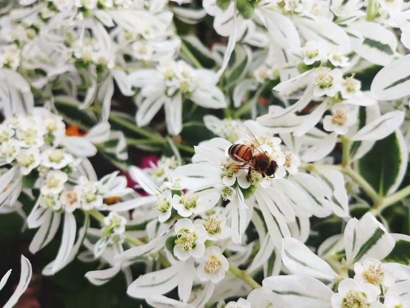 Day Nature Outdoors Plant Bee Fragility Animal Themes Full Length Beauty In Nature Flower Head Freshness