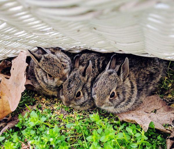 Bunny  Bunnys Babybunny Springtime Spring Newlife Nature Photography Cute Life Close-up