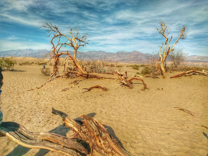 Dead Trees On Sand At Desert Against Sky
