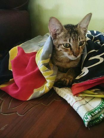 Missing u my lovely , my pego 😭😘😍😙😚 Ailurophile Missing You Iloveyou Lovemycat♥ Sad Face Cat Lovers Mycat♥ Cats 🐱