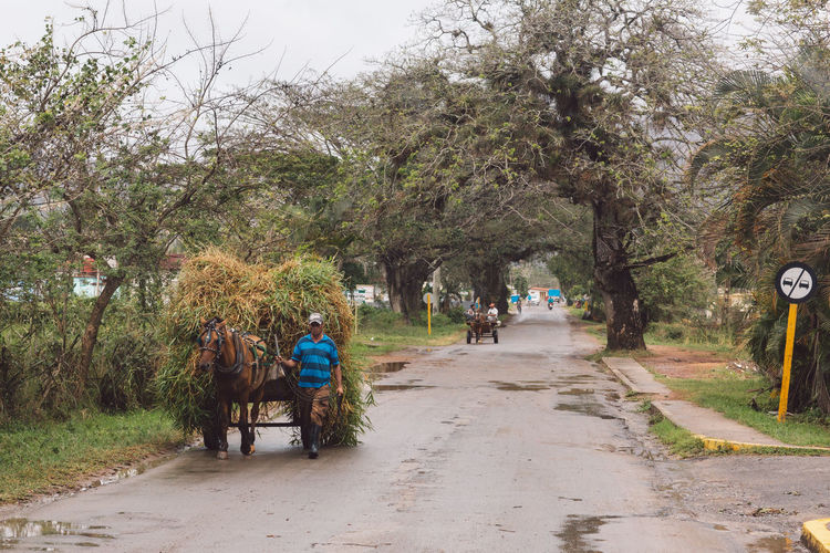 People riding bicycle on road amidst trees