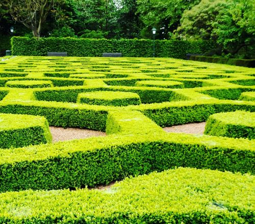 pretty green peace. Beauty In Nature Day Formal Garden Garden Path Grass Green Color Growth Hedge Maze Nature Outdoors Park - Man Made Space Tree Lifestyles