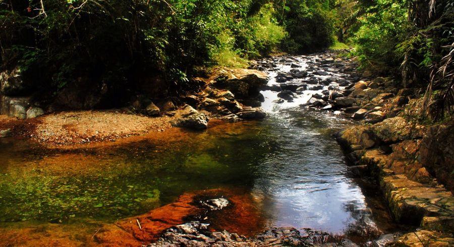 River Nature Ecuador Traveling todo lo que necesitas es Pacto, un lugar muy tranquilo y acogedor!