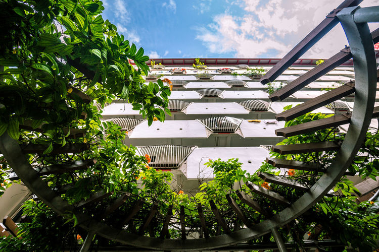 Facades of yesteryear - Public housing apartments. I went back. Architecture Beauty In Nature Building Exterior Built Structure Cloud - Sky Day Green Color Growth Leaf Low Angle View Nature No People Outdoors Plant Residential Building Residential District Residential Structure Sky Trellis The Architect - 2018 EyeEm Awards
