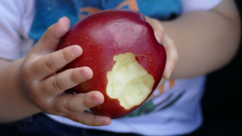 Apple Bowl Boys Child Childhood Close-up Day Eating Food Food And Drink Freshness Fruit Healthy Eating Holding Human Body Part Human Hand Indoors  Kid Hand  Lifestyles Midsection One Person People Ready-to-eat Real People Red