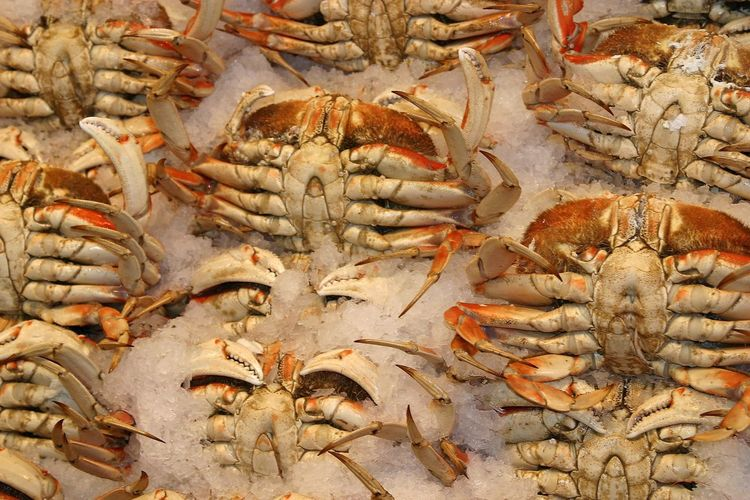 Dungeness Crab Crab Seafoods Market Fish Market Crustacean Claws Food On Ice