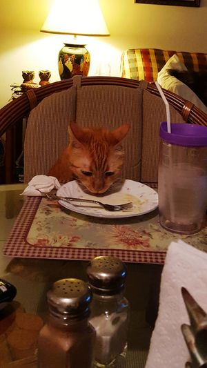 Guess who came for dinner? No People Cat Dinner Dinner Time Dinner Date Dinning Pet pets Pet Portraits
