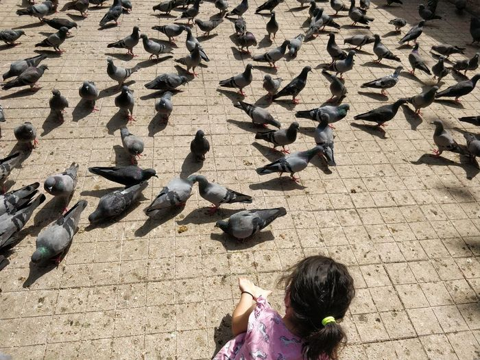High angle view of pigeons feeding