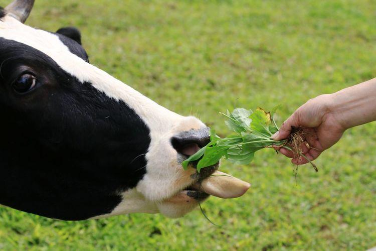 Close-up of hand feeding on grass