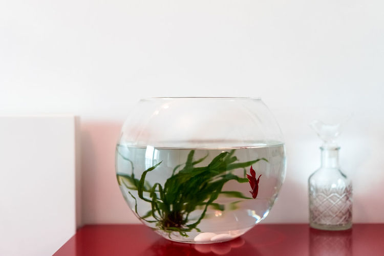 Close-up of fish in bowl on table against wall