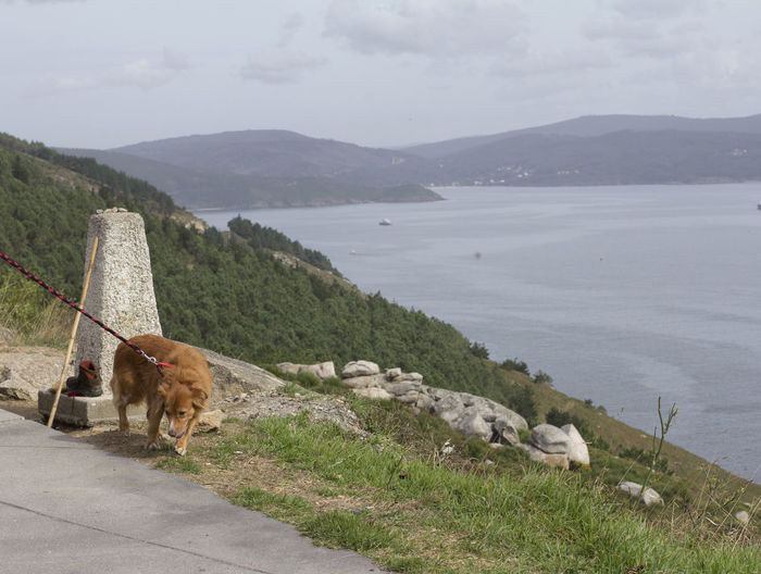 View of a dog on mountain against sky