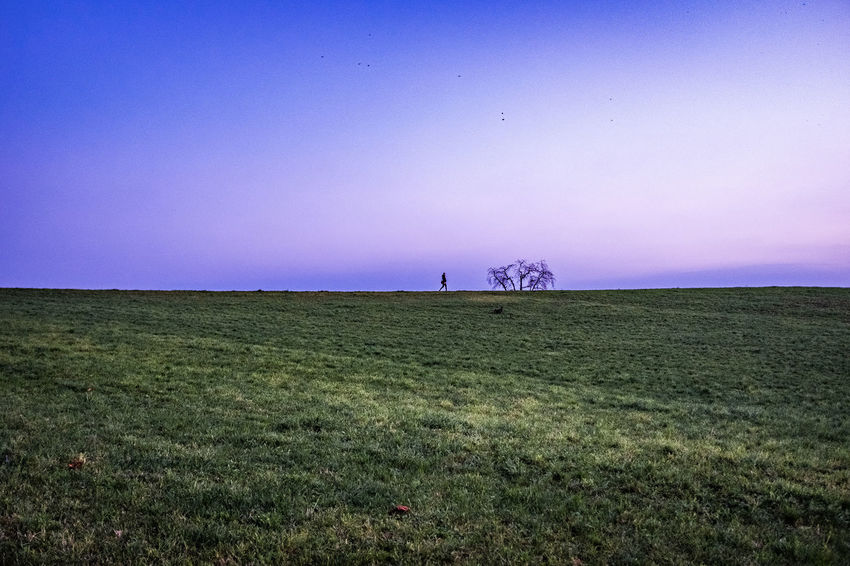 Sky Field Environment Plant Landscape Land Grass Tranquil Scene Tranquility Beauty In Nature Nature Scenics - Nature Clear Sky Horizon No People Horizon Over Land Non-urban Scene Copy Space Growth Outdoors