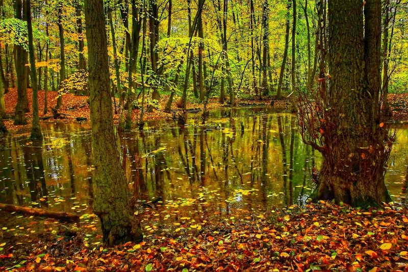 Herbst Outdoors Nature Morning Landscape Perfect Cologne Wanderlust Wonderful Day EyeEm Nature Lover EyeEm Gallery Autumn Autumn colors Sea Seascape Seascape Photography EyeEm Selects Eye4photography  EyeEm Best Shots Wonderful View Wonderful World Of Photography 🤗 Backgrounds Full Frame Leaf Close-up Growing Young Plant