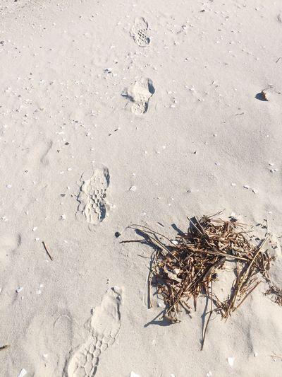 December beach walk .. Chesapeake Bay, Maryland, Western Shore Chesapeake Bay Maryland Beaches Footprints In The Sand St.Leonard FlagHarbor Longbeach Let's Go. Together.