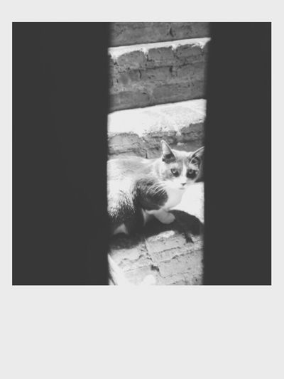 I can read you like an open book. 📖▫◾ One Animal Day No People Photography Silence First Eyeem Photo Black & White Life Phothograph Faces Of EyeEm Perfect Cat♡ Catlovers Cats Of EyeEm